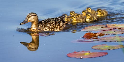 IJAMS BIRD-ABOUTS: Melton Hill Park