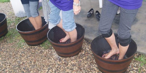 SMASHED for a GRAPE Cause, Grape Stomp