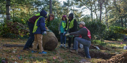 Volunteer: Community Tree Planting - Tregaron Conservancy