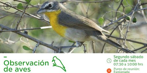 Recorridos de Observación de Aves Parque Rufino Tamayo