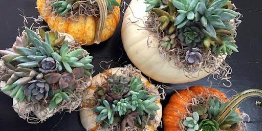 Succulent Pumpkin Centerpiece Workshop