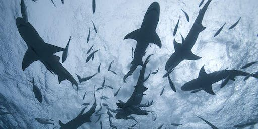 Networking for Sharks