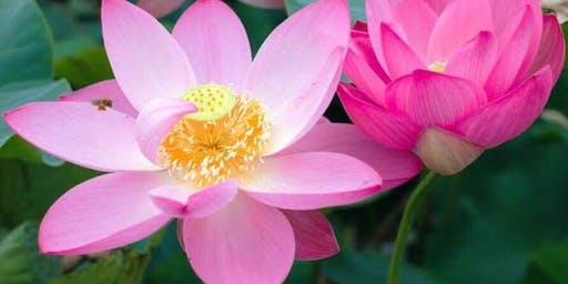 Flower Focus Mindfulness - BYO Flower