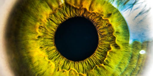Research Week 2019-  Retinal Diseases