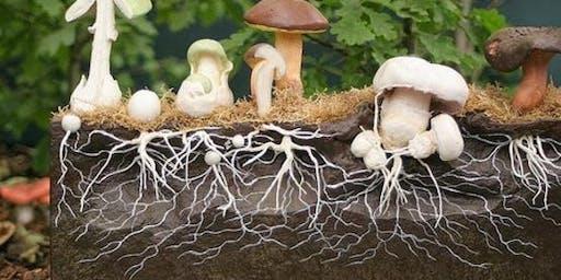Mushroom Growing Masterclass with Meow-Ludo Disco Gamma Meow Meow