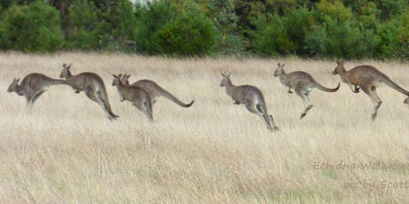 Commercial Kangaroo Harvest introductory workshop tickets
