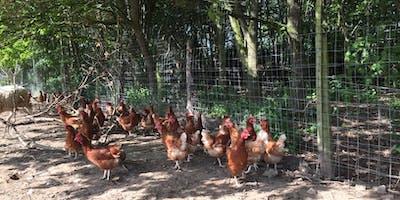 Clyttir Egg Farm Tour  –   Taith o gwmpas Fferm Wyau Clyttir