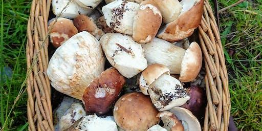 Ballyhoura Mountain Mushrooms Mushroom Forager Glen of Aherlow Sunday October 6th