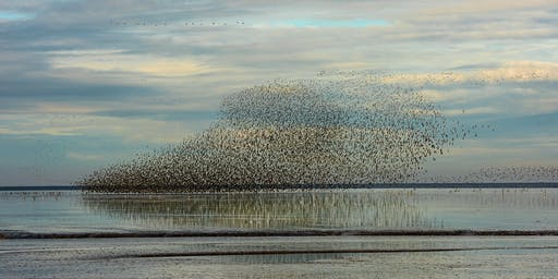 Wader Watch at RSPB Snettisham Nature Reserve