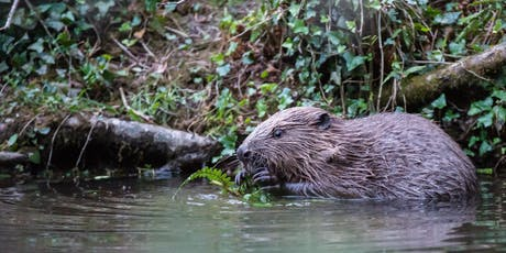Beaver Ecology & Conservation tickets