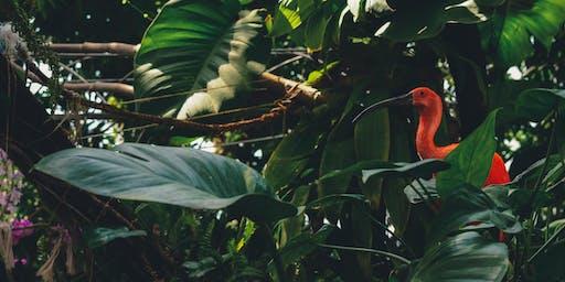 Jungle Light Night!