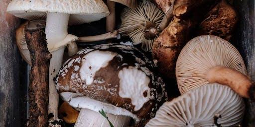 Initiation à la Mycologie (40 $)