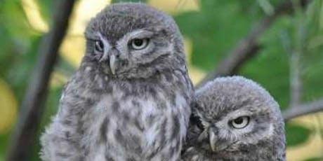 Urban Owls Talk tickets