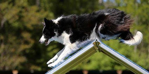 Companionship Dog Agility Class