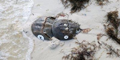 Horseshoe Crab Citizen Science Training 2019