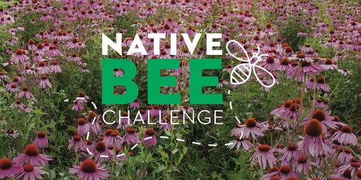 Native Bee Class for Kids 11:00am