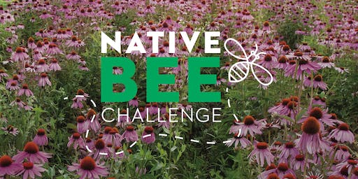 Native Bee Class for Kids 1:30pm