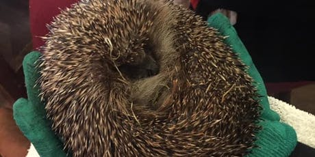 Yoga for the Hedgehogs - Donation Class Fundraiser tickets