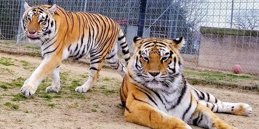 August 2019 Big Cats Behind the Scenes 8/4/19-4pm to 6pm