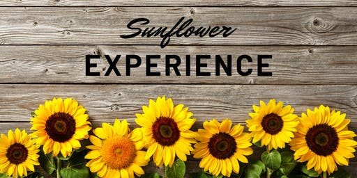 Brantwood Farms Sunflower Experience