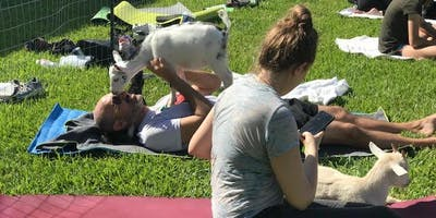 Goat Yoga Houston Friendswood Sold Out