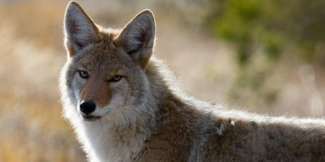 Coyote Safety Workshop tickets