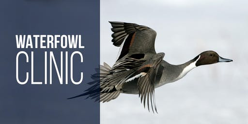 How to be Successful at Waterfowl Hunting - Farmington Bay