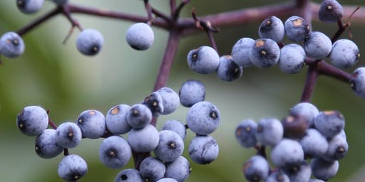 Elderberry Field Day: Planting hedgerows for Additional Farm Sales