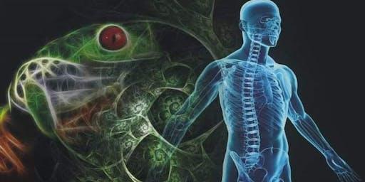 Full Detox Retreat - Kambo & Abdominal Massage