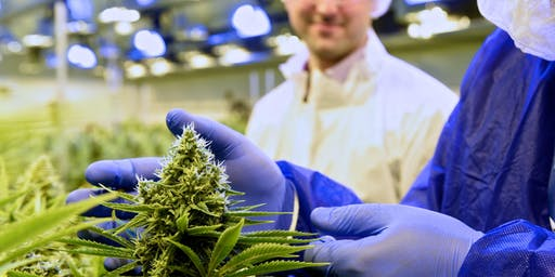 Medicinal Cannabis - What is all the fuss about - GP's ONLY