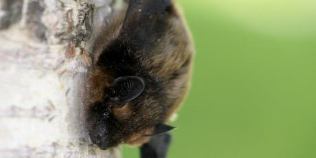 The Community Farm Bat Walk  tickets