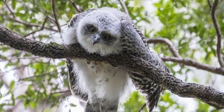BirdLife Southern Queensland Owl workshop & training tickets