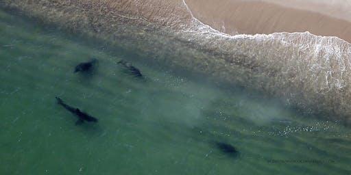 """Living with White Sharks"" by Dr. Greg Skomal"