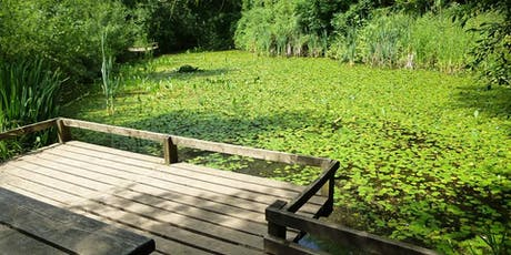 Summer Pond Dipping at Ryton Pools Country Park tickets