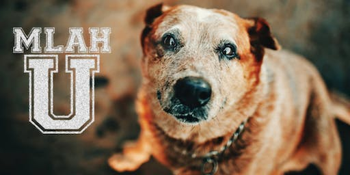 What To Do To Make Your & Your Geriatric Pet's Life Better