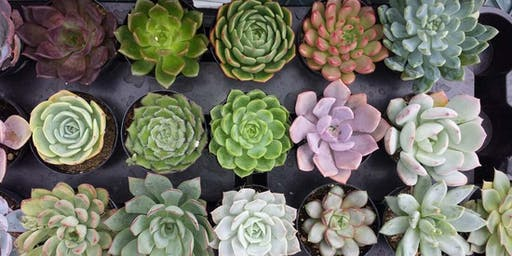 Succulent Workshop at Nourish Juice Bar + Kalos Coffee Co