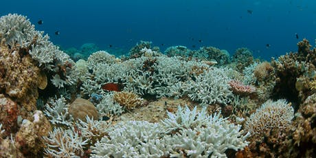The Biology of Corals, Basic Research and Environmental Health tickets