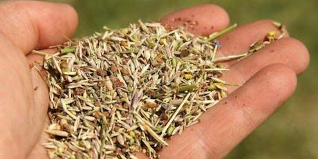 Les semences et la perte de biodiversité : nous sommes tous interpellés ! billets