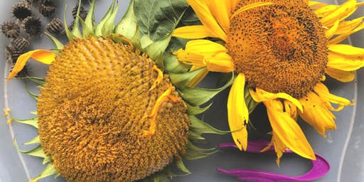 LHS: Toddler Sunflower Sensory Workshop