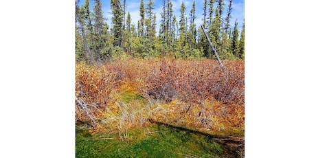 NAIT Peatland Ecology Field Course tickets