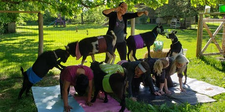 1 Hour Goat Yoga tickets