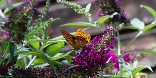 Nature Gardening Series • Birds, Butterflies, Bees, Pollinators and Much More with Ron Vanderhoff