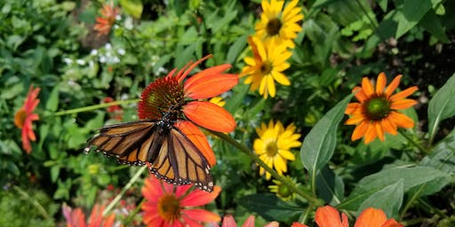 Copy of School Gardens and Monarch Conservation Workshop (WEEKDAY)