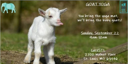 Goat Yoga at CareSTL