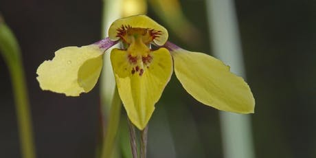 Orchids and Wildflowers in the Mullum Mullum Valley tickets