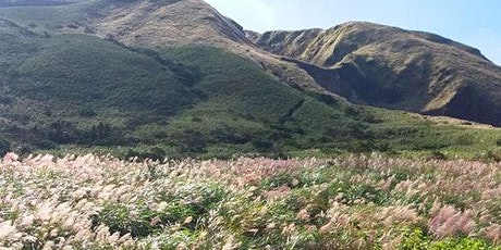 Yangmingshan National Park & Hot Spring Tour tickets