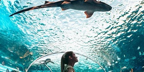 Ripley's Aquarium of Canada: Sharks After Dark tickets
