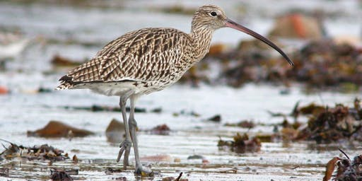 Out of One's Depth? An Introduction to Wading Birds