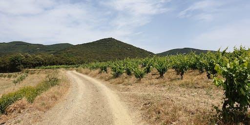 Vineyard tour and winetasting