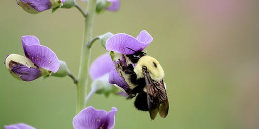 """Becoming a """"Pollinator-Pro"""" Workshop"""